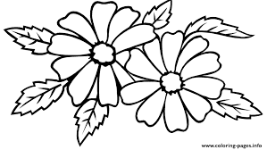 jasmine flower sf27a coloring pages printable
