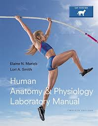 College Anatomy And Physiology Notes College Anatomy And Physiology Notes Online Accredited Anatomy And