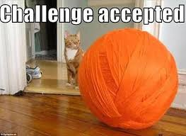 Funniest Challenge Memes Of The Challenge Accepted Social Media Trend Daily