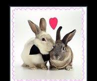 my easter bunny easter jokes pictures photos images and pics for