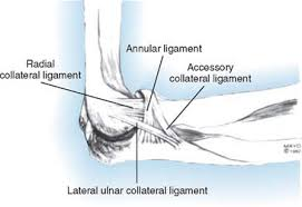 Lateral Collateral Ligament Ankle Lateral Collateral Ligament Insufficiency Clinical Gate