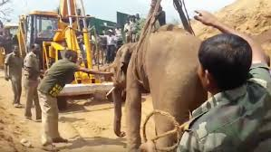 baby elephant rescued from 70ft well well ntd inspired