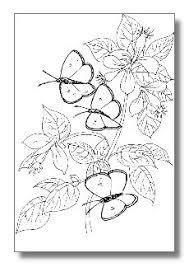 pin deborah kephart butterfly butterfly party