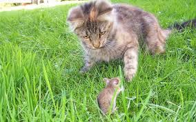 How To Get Rid Of Moles In The Backyard by How To Get Rid Of Mice In The House