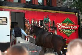 Budweiser Clydesdale Barn About The Budweiser Clydesdales Simply Marvelous Horse World