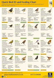 a guide to bird feeding howto infographics infographics