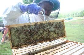 first frames full of honey from new beehives diy living