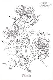 poppies thistles and goldenrod flowers embroidery transfer pattern