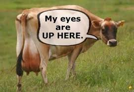 My Eyes Meme - image cow my eyes are up here meme thread 8986384 jpg fark wiki