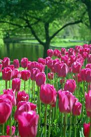 Spring Flower Garden 354 Best Tulips Tulppaanit Images On Pinterest Flowers
