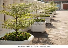 potted plants along pathway planted small stock photo 128581619