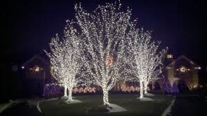 growing on trees outdoor lighting ideas
