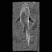 imagenes sorprendentes gif pin de stephen jones en cinemagraphs gifs pinterest anfibios