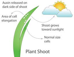 plant adaptations and responses ck 12 foundation