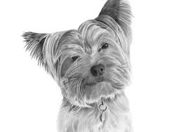 yorkshire terrier portrait dry brush oil painting youtube
