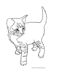 tabby cat clipart cute kitten pencil and in color tabby cat