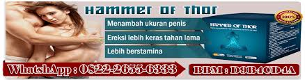 hammer of thor di solo obat kuat hammer of thor di solo agen