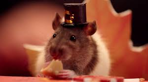 thanksgiving holiday images give thanks this tiny hamster u0027s thanksgiving is the cutest
