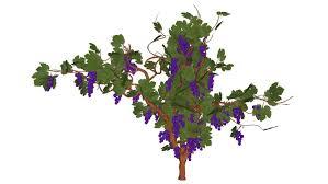 3d generic tree 08 vine tree 3d warehouse
