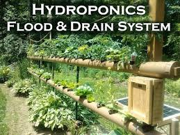 nft hydroponics on grow aquaponically