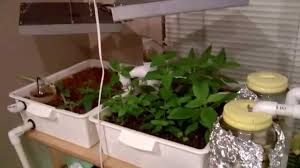 my first small indoor aquaponics setup featuring my low powered