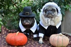 25 pets in pilgrim costumes photos huffpost