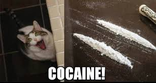 Cat Cocaine Meme - cats on cocaine album on imgur