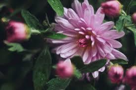 Home Decorator Jobs by Fresh Flower Arrangements In The Strangest Places Loversiq