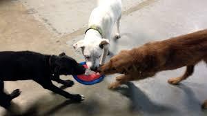 renton dog parks and outdoor adventures rover com