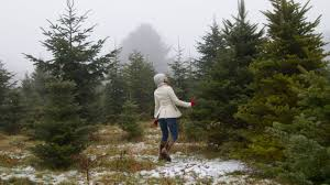 cristmas tree five surprising ways your christmas tree can give back after