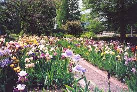 Botanic Garden St Louis by Greater St Louis Iris Society Local Gardens