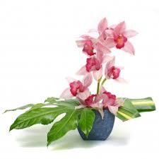 Orchid Flower Arrangements Cymbidium Orchid Flower Arrangement