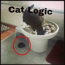 Stupid Cat Meme - my cat meme by blauwiis4ever memedroid