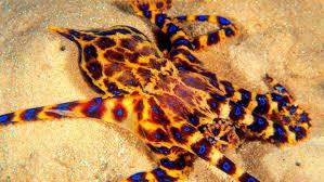 imagenes animales australia animales de australia los 5 animales más letales
