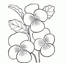 easy beautiful flower drawing drawing of sketch