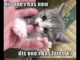 Cute Kittens Meme - cute kitten photos with captions xd youtube