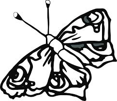 line drawings of butterflies