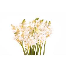 of bethlehem flower of bethlehem flower white of bethlehem types of