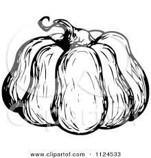 pumpkin black and white pumpkin clipart of a sketched black and white pumpkin royalty free