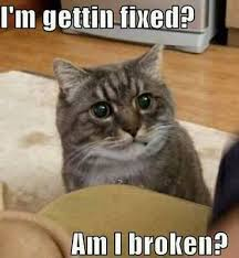 Cat Meme Images - 50 best cat memes funny cat memes