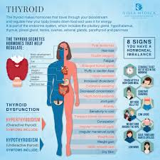 Human Anatomy Thyroid Treating Thyroid Disorders Creating A Healthy Balance Villa Medica