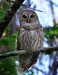 interesting facts about owls for kids yourkidsplanet com