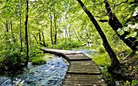 free forest stream wallpaper 1920x1200 84078