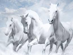 white mustang horse animals wallpaper hd white horse wallpapers at bozhuwallpaper
