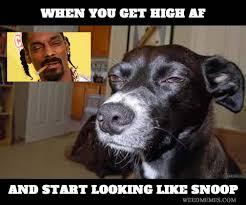 Top Memes - top 24 snoop dogg memes thug life meme