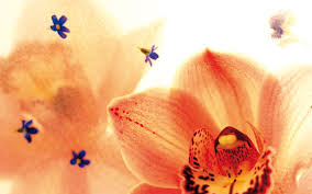 animated flower images free download clip art free clip art