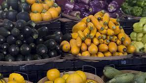 vegetable gardening tips for central florida garden guides