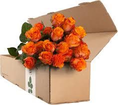 orange roses 24 orange roses the roseman company
