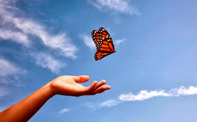 romantic butterfly pics latest free download full hd imagess