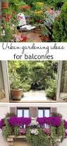 What Is Urban Gardening Best Flowers For Balcony Garden Apartment Balconies Balconies